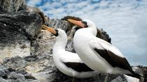4-Night Galápagos Islands from Isla Baltra, Galapagos Islands, Multi-day Tours