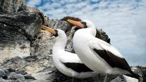 Authentic Galápagos 4-Day Tour, Galapagos Islands, Multi-day Tours