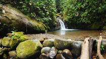 Private Tour: Mindo Nambillo Cloud Forest Reserve from Quito, Quito, Food Tours