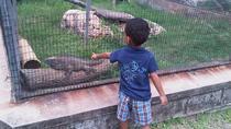Tour Jamaica Zoo in Saint Elizabeth, Montego Bay, Zoo Tickets & Passes