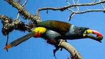 Birdwatching Tour in Cajas National Park from Cuenca, Cuenca, Attraction Tickets