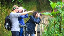 Birdwatching Tour in Tinajillas Forest area from Cuenca, Cuenca, Nature & Wildlife