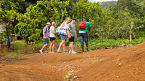Rainforest Hike, St Lucia, Hiking & Camping