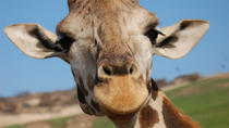 San Diego Zoo Safari Park, San Diego, Hop-on Hop-off Tours