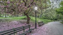 Central Park Walking Tour, New York City, Running Tours