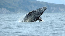 San Diego Whale Watching Sailing Tour, San Diego, Dolphin & Whale Watching