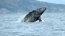 San Diego Whale Watching Sailing Tour, San Diego, Air Tours