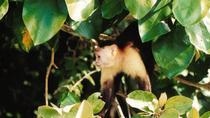 Panama Canal Wildlife Boat Tour and Jungle Walk, Panama City, Day Trips