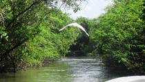 Tres Palos Lagoon and Baby Turtle Release Tour with Lunch from Acapulco, Acapulco, Eco Tours