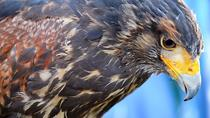 Beginners Falconry Experience, Fayetteville, Nature & Wildlife
