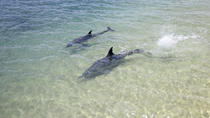 3-Day Monkey Mia Dolphins, Pinnacles Desert and Kalbarri National Park Tour from Perth, Perth, Day ...