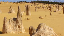 Pinnacles Desert, Koalas and Sandboarding 4WD Day Tour from Perth, Perth