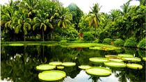 1 Day Xishuangbanna City Tour with Menglun Tropical Botanical Garden, Jinghong, City Tours