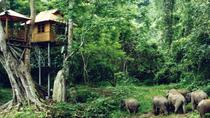 1 Day Xishuangbanna Tour with Wild Elephant Valley, Southwest China, Day Trips