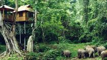 Private Xishuangbanna and Wild Elephant Valley Day Tour from Jinghong, Jinghong, Day Trips