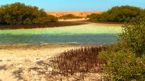 Excursion privée : mangroves, Charm el-Cheikh