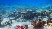 Tiran Island Cruise and Snorkeling, Sharm el Sheikh