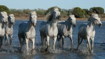 Arles and Camargue Small-Group Half-Day Tour from Avignon, Avignon, Half-day Tours