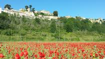 Half day private tour for 2-3 person, Avignon, Private Sightseeing Tours