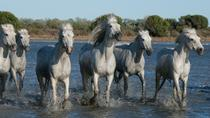 Small-Group Half Day tour of Arles and Camargue from Avignon, Avignon, Day Trips