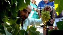 Full Day Sherry Wine Experience from Cádiz, Cádiz, Wine Tasting & Winery Tours