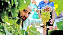 Full Day Sherry Wine Experience from Jerez, Andalucia, Private Sightseeing Tours