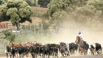 Medina Sidonia Village and Wild Bull Spotting in Andalucia , Cádiz, Day Trips