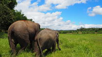 Half-Day Ethical Lanna Kingdom Elephant Sanctuary Tour, Chiang Mai, Half-day Tours