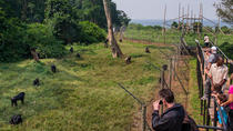 Ngamba Island Chimpanzee Sanctuary in Uganda, Kampala, Nature & Wildlife