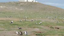 Marta Island, Magdalena Island and Punta Arenas City Tour, Punta Arenas, Day Trips