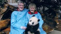 Panda Volunteer Work and Holding Panda in Dujiangyan, Chengdu, Volunteer Tours
