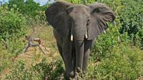 5-Day Victoria Falls and Chobe National Park Tour with Round-Trip Flight from Johannesburg, ...