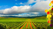 Guadalupe Valley Wine Route Tour in Baja California, Ensenada, Wine Tasting & Winery Tours