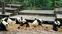 Everything Panda Private Day Tour in Chengdu, Chengdu, Private Sightseeing Tours
