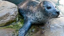 New England Aquarium Admission, Boston, null
