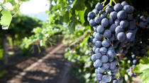 Gourmet Sicily: Lunch or Aperitif with Winery Visit, Trapani, Dining Experiences