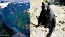Prince of Wales Bear Viewing, Ketchikan, Air Tours