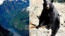 Prince of Wales Island Bear-Viewing Tour By Air From Ketchikan, Ketchikan, Air Tours