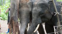 Half-Day Visit to Hug Elephant Sanctuary in Chiang Mai, Chiang Mai