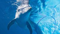 Winter the Dolphin Tour at Clearwater Beach from Orlando, Orlando, Day Trips