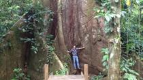 Cinco Ceibas Rainforest Reserve and Adventure Park from San Jose, San Jose, Day Trips
