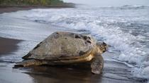 Nationaal park Tortuguero, San Jose, Day Trips