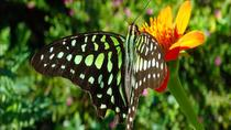 The Butterfly Conservatory Admission Ticket, La Fortuna, Attraction Tickets