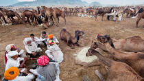 13-Day Pushkar Photo Expedition from Delhi, New Delhi, Photography Tours
