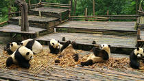 Full Day Panda and Leshan Giant Buddha Group Tour, Chengdu, Day Trips