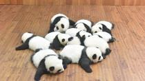 Private One Day Chengdu Panda Tour and Chengdu City visiting, Chengdu, Cultural Tours