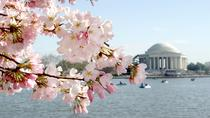 3-Day Washington DC Cherry Blossom Bus Tour from Boston, Boston, Multi-day Tours