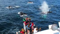 Full-Day Trip to Plimoth Plantation, Whale Watch Tour from Boston, Boston, Day Trips