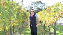 Private Tour of West Auckland's Kumeu Wine Trail, Auckland
