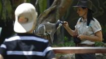 Currumbin Wildlife Sanctuary, Gold Coast, null